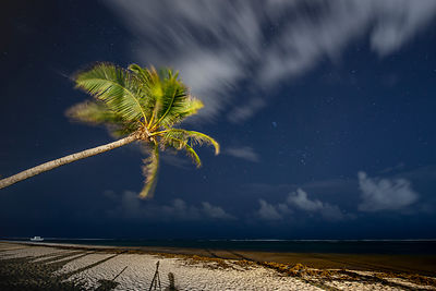A Shy Meteor from Perseids over Punta Cana Beach