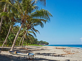 Palm fringed beach on Savo Island Solomon Islands South Pacific