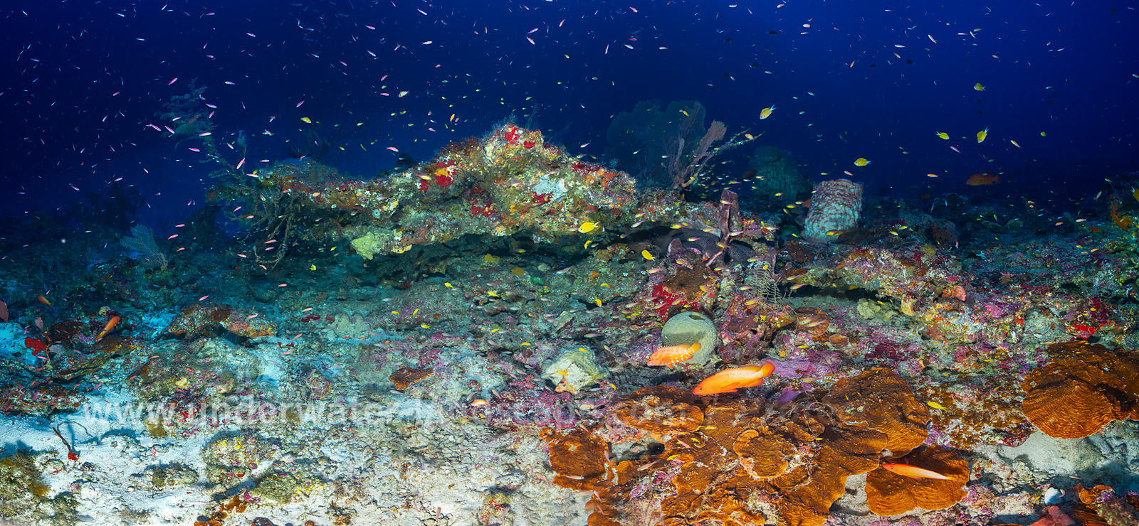 Mesophotic reef of Mayotte Island