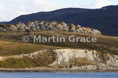 Nothofagus woodland and mountains of Tierra del Fuego from the Beagle Channel, Argentina