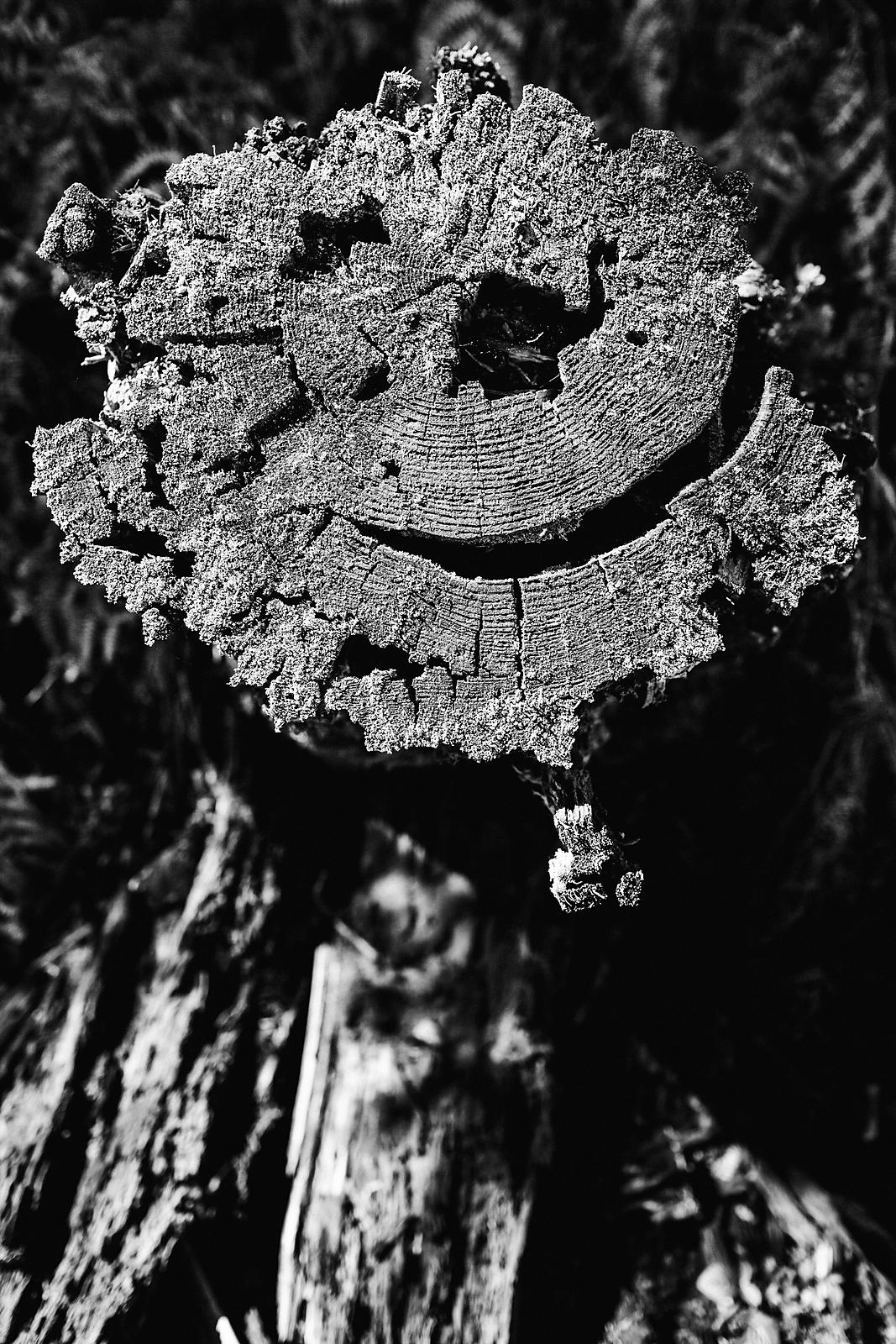 Now, even the nature use smileys