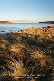 Image - Marram grass on the dunes at Big Sand, near Gairloch, Wester Ross