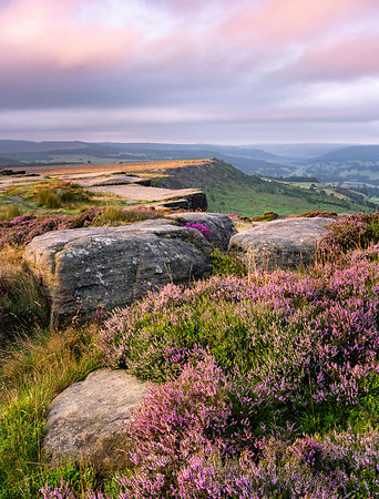 August morning on Curbar Edge | Peak District heather