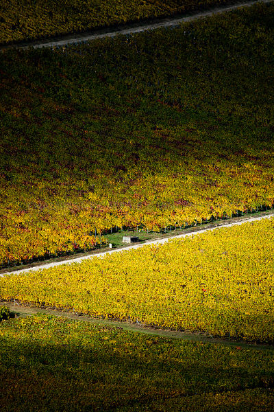 Champagne-Galerie-Atmosphere-automne-puits-7404