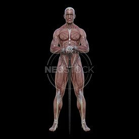 cg-body-pack-male-muscle-map-neostock-5