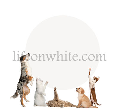 Cats and dogs in front of a blank sign, isolated on white