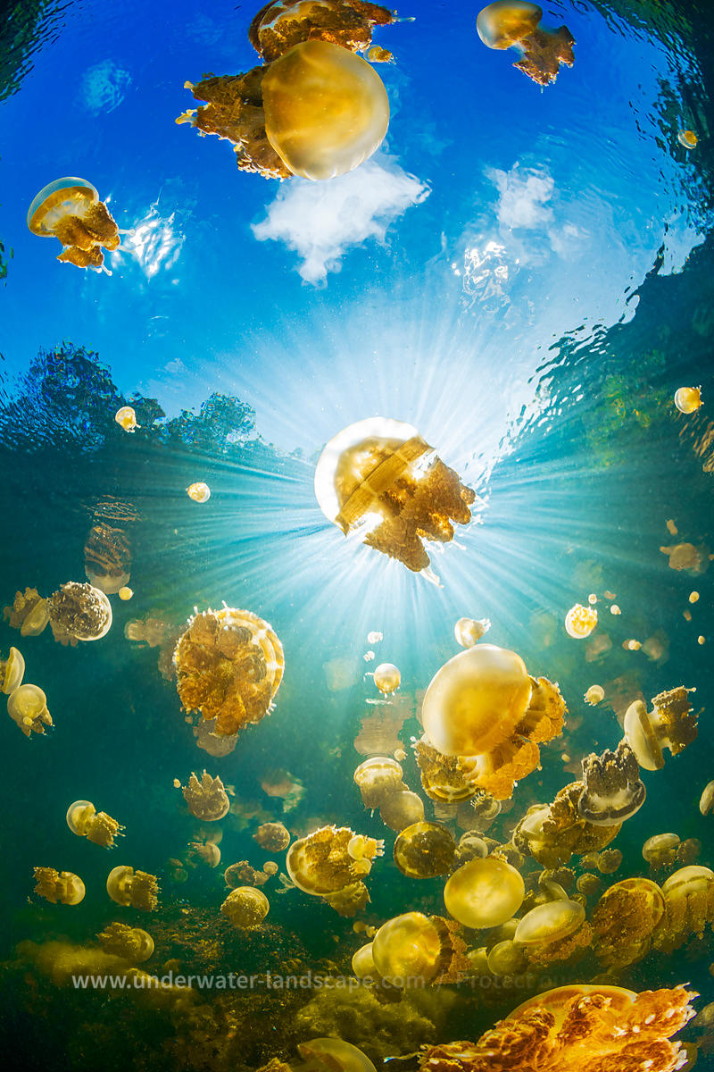 Sunlight and Jellyfish