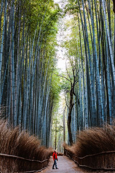 Man standing at bamboo forest, Kyoto, Japan