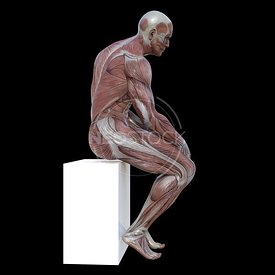 cg-body-pack-male-muscle-map-neostock-43