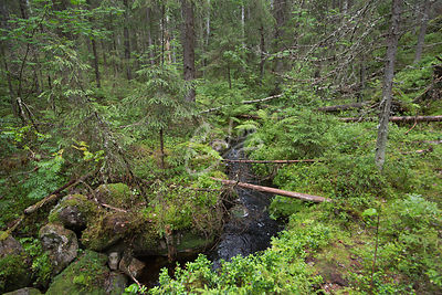 Beautifu forest and canyon view of Rotkolaakso