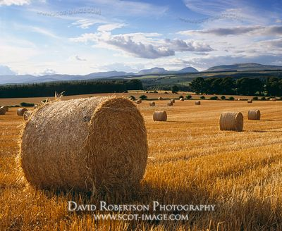 Image - Round straw bales in field