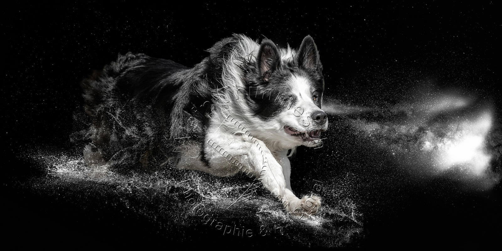 2020-Art-Digital-Alain-Thimmesch-Chien-6