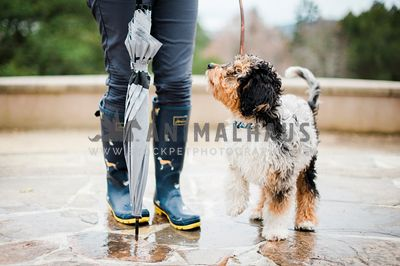 A dog looking up at a woman in rubber boots and holding an umbrella