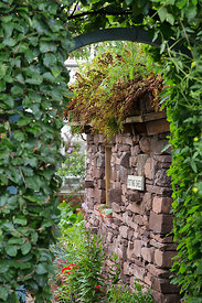 Potting shed viewed through hedge doorway
