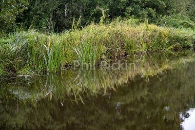 Area of clumps of grass beside a canal reflected in the water.