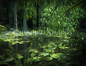 Waterlily Pook In Forest