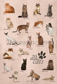 Cat breeds poster in English