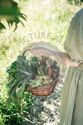 Basket full of organic vegetables from the garden