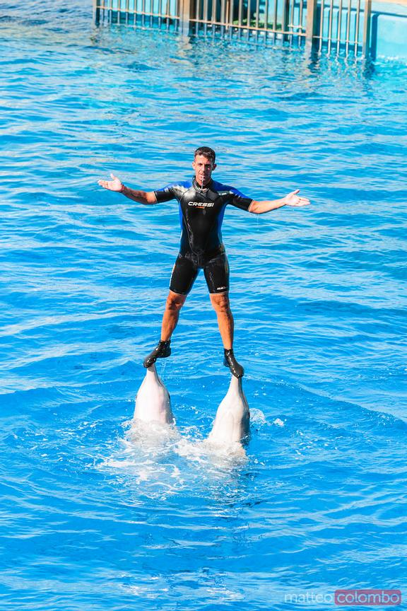 Man and dolphins during a show at the Oceanographic, Valencia