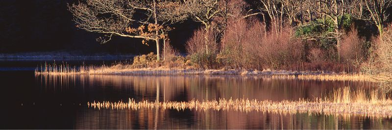 Image - Loch Chon trees,  the Trossachs, Scotland