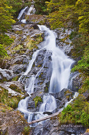 Waterfall  - Oceania, New Zealand, South Island, West Coast, Westland, Mount Aspiring National Park, Haast River, Fantail Fal...