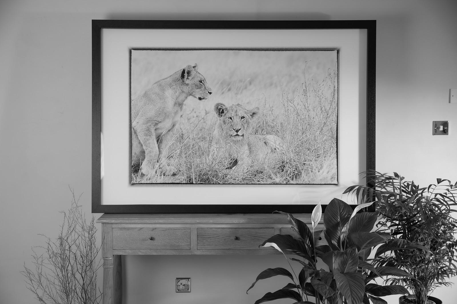 'Lion No.3' Kenya 2019: Photographer Neil Emmerson