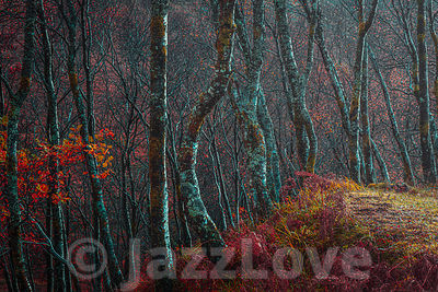 Light in autumn woodland