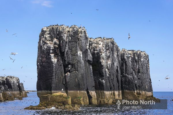 FARNE ISLAND 25A - The Pinnacles