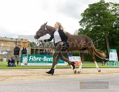 Indie Vaughan-Jones and QUOB DYNAMIC at the trot up, Equitrek Bramham Horse Trials 2019