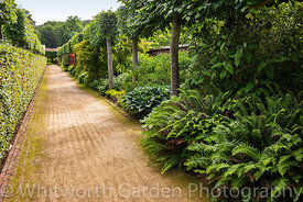 Avenue of Lime trees in The Plantsman's Walk at Scampston Hall Walled Garden, North Yorkshire, designed by Piet Oudolf