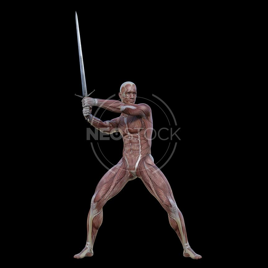 cg-body-pack-male-muscle-map-neostock-44