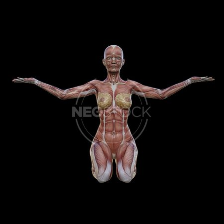 cg-body-pack-female-muscle-map-neostock-26