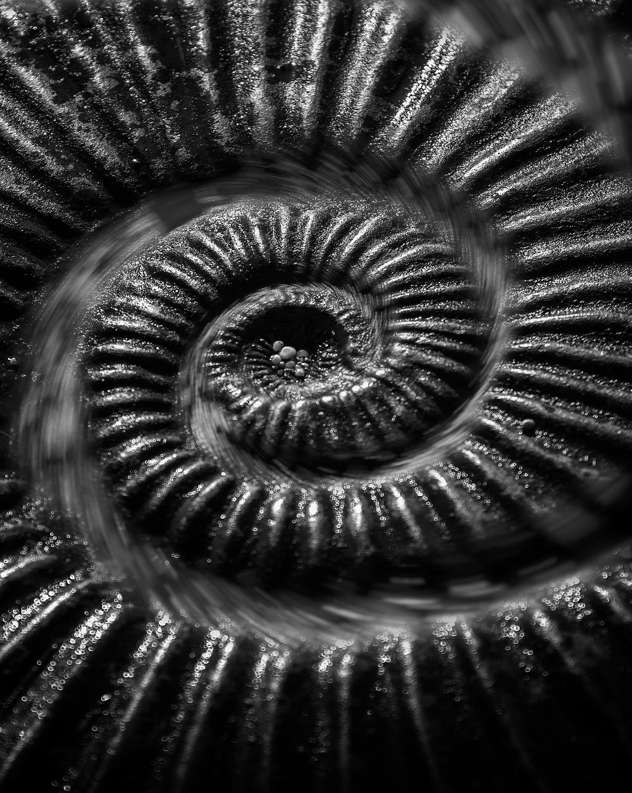 ammonite_warp_crop