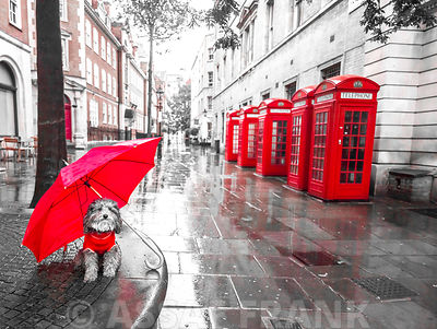 Dog with umbrella on London city street