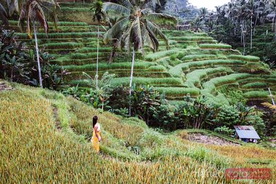 Beautiful woman at rice terraces, Ubud, Bali, Indonesia