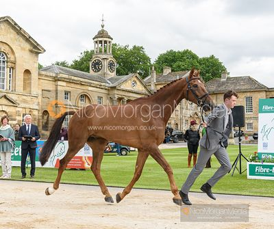 Sam Ecroyd and DAVINCI III at the trot up, Equitrek Bramham Horse Trials 2019