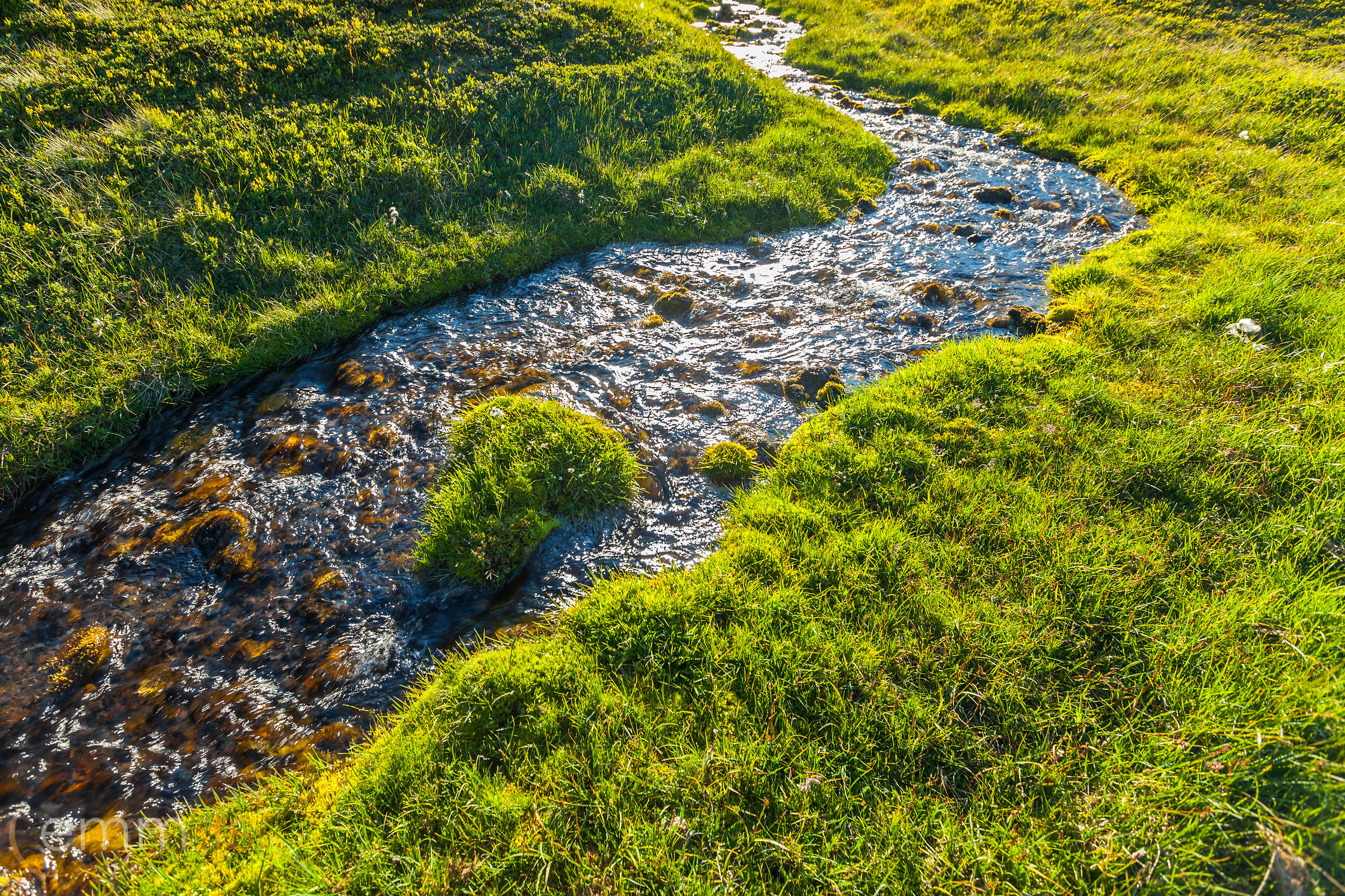 Grass_moss_and_water_in_west_Iceland_emm.is