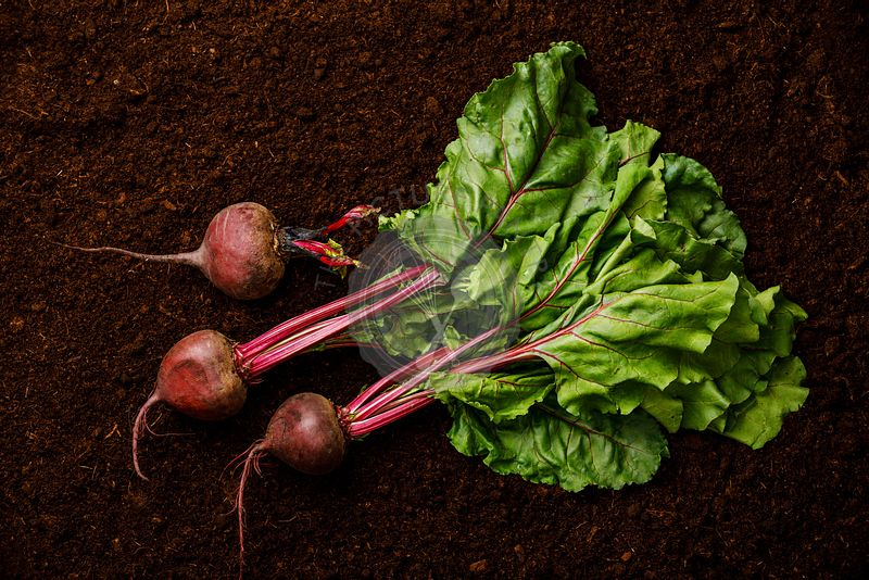 Ripe fresh Beet root on black ground background