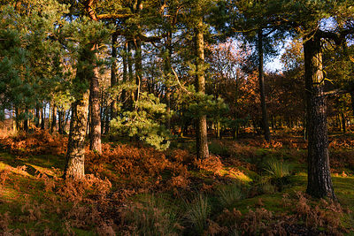 Autumn trees on the Longshaw Estate