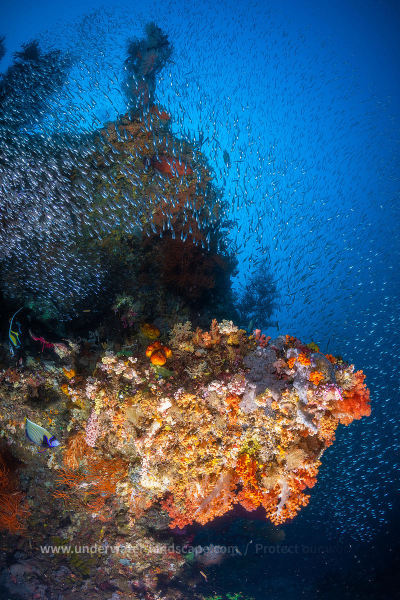 Reefscape from Raja Ampat
