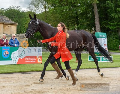 Barbara Sayous and OPPOSITION FILMSTAR at the trot up, Equitrek Bramham Horse Trials 2019