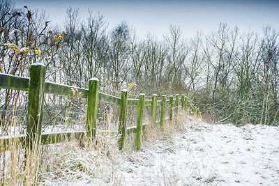 Snow on winter meadow with mossy wooden fence.