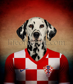 Dalmatian wearing a Croatian football jersey with the colors of the flag in the background