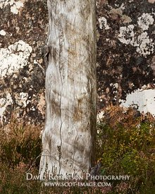 Image - Dead tree trunk against lichen covered rock