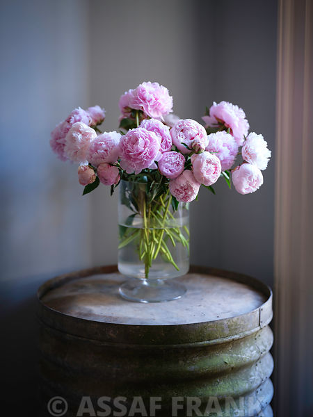 Peonies in flower vase