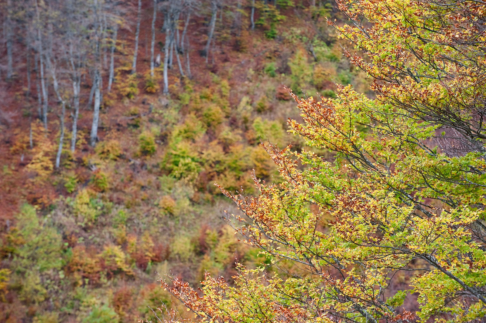 Autumn colours on Visitor mountain, Plav, Montenegro