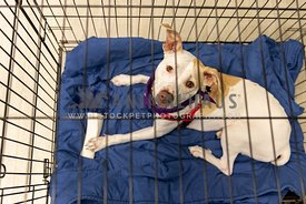 A mixed breed dog in a crate at an adoption event