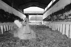 #120041, One of the Sisters preparing silage on the farm at Ladywell Convent, Godalming, the Motherhouse of an International ...