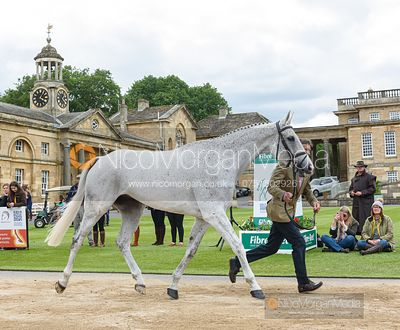 Andrew Nicholson and AS IS at the trot up, Equitrek Bramham Horse Trials 2019