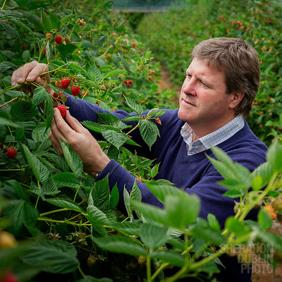 Portrait of Paul Kelsey, owner of Kelsey Farms for Waitrose Weekend
